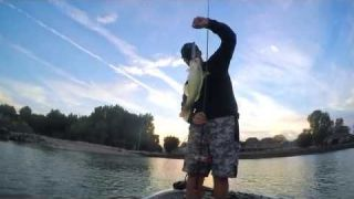 IMA Little Stik | When You Want a Walking Bait That Pushes Water