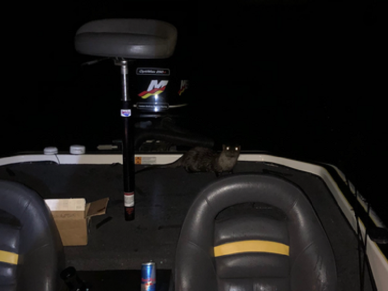 Late Night Visitor & Clear Lake Follow Up - So, I was fishing last night at Clear Lake by myself when I heard a strange noise in the back of the boat