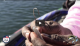 Jimmy Houston Knot & D-Shad rigging How-to tutorial VIDEO