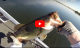 8 pound bass delta topwater VIDEO