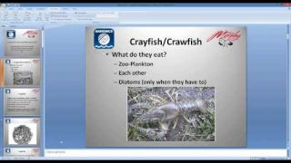 Navionics Webinar: Crawfish Colors and Movements with Michael Murphy