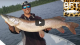 Pike that big on an 8 inch bucktail spinner. | Video