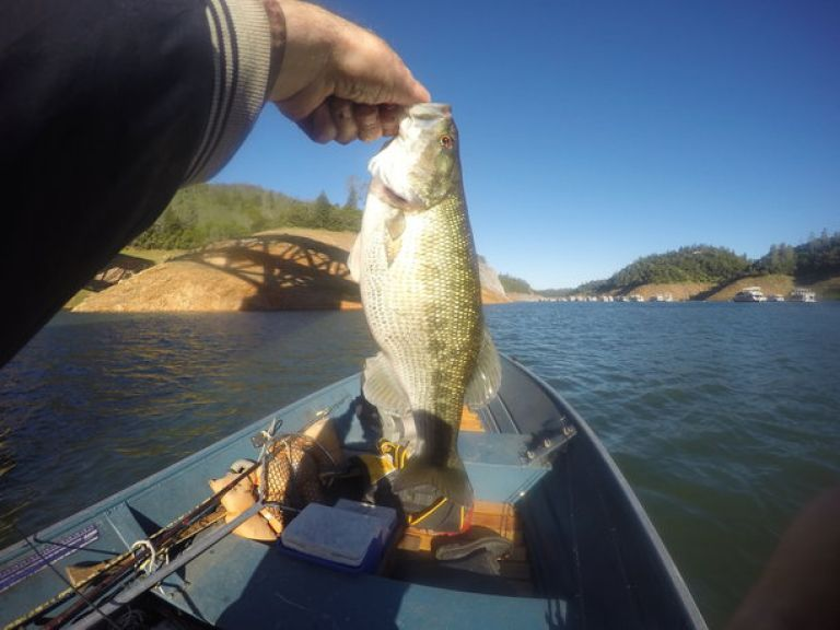 Fishing Lake Oroville This Week | April 20 - Winds tapered off about 9 am or so. Bite picked up a tad, but water still cool, 56.6 to 57.8 degrees in my travels.