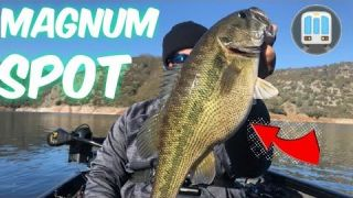 New melones lake Magnum Spotted Bass
