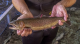 It's being called a miracle: NATIVE CUTTHROAT TROUT RETURN
