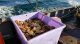 Dungeness crab fisheries Opening