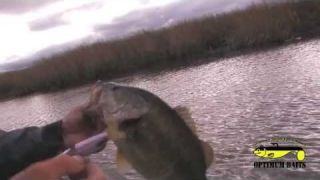 How-to fish a wake bait using the Optimum Baits OB Minnow Top Water Bait