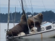 Two sea lions on a boat