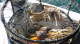 CDFW announced 15-day delay for the northern California commercial Dungeness crab season.