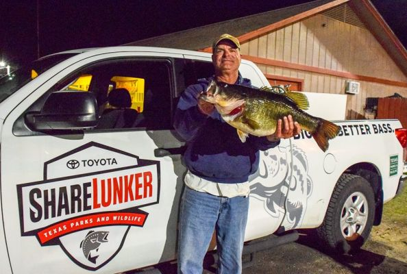 On March 8, Michael Terrebonne landed Lake Fork's second Legacy Class ShareLunker with this 13.00 pound bass was entered into the program.