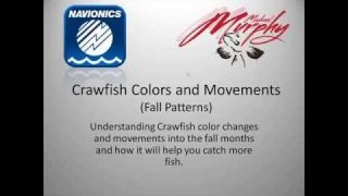 "Navionics Webinar: ""Crawfish Colors and Movements: Fall Patterns"" with Michael Murphy"