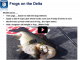 Frog Fishing the Delta Webinar | VIDEO