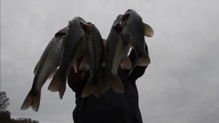 New melones lake bass fishing