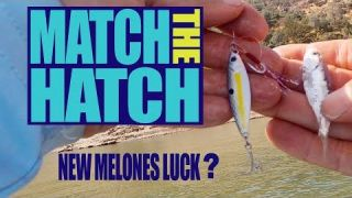 Match The Hatch! New Melones Luck?
