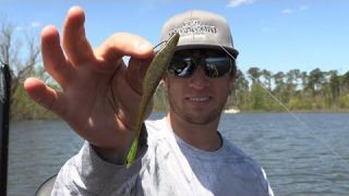 D Shad Basics with Fletcher Shryock