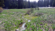 Fisheries Habitat Restoration and Forest Legacy Projects Awarded $13 Million Plus