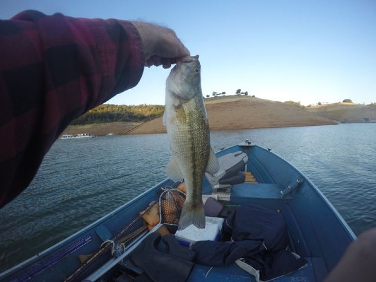 Fishing Report Oroville This Week | June 13 - Launched about 5:30 am today, stopped fishing about 10:10 am. Found fish again right off the dock where they sell gas, 12 fish