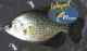 Crappie Fishing Clinic | Space is Limited!