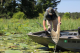 25,000 fingerling largemouth bass into backwater areas to improve survival.