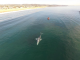 Gillnet snags gray whale in SoCal