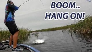 Tackle How-To: Big Bass Attacks | Willowleaf Spinnerbait TIps with Scott Martin