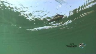 Underwater Viewpoint | Yamamoto Baits In Action