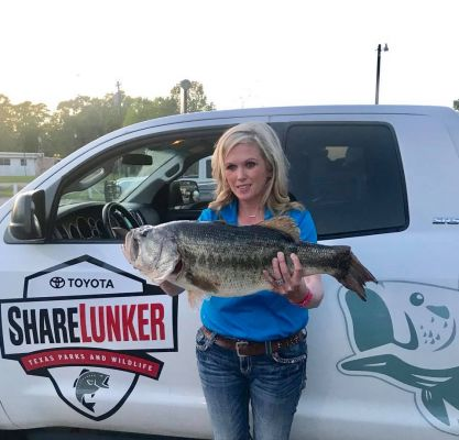 On March 31, a 13.06 pound ShareLunker from Sam Rayburn was caught by Stacy Spriggs. The Spriggs' bass was weighed and cared for at the newest ShareLunker holding station, Sam Rayburn Lakeview.