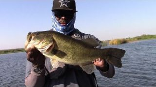 Fall Transition Topwater and Punching Action with Bobby Barrack