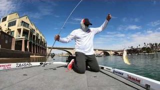 Sight Fishing at Lake Havasu VIDEO