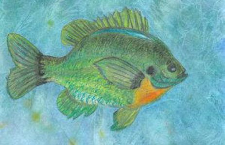 21st Annual State-Fish Art Contest Now Open