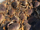 Further delay for start date of California Dungeness crab season