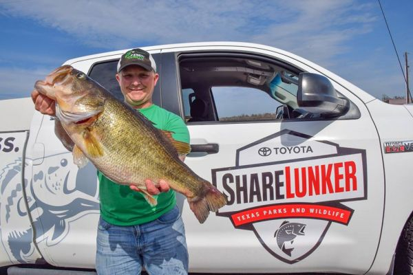 On March 11, Alex Finch with his 13.06 pound Lunker from Lake Fork This one was the 3rd Legacy Class ShareLunker to come out of Lake Fork in a span of less than two weeks. The ShareLunker Program reported that it was March Madness in Texas.