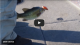 SuperBowl LII Winter Delta Fishing | Video From the Water