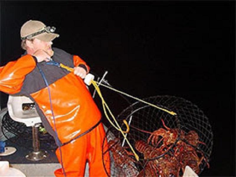 New regulations as california lobster season opens for Lobster fishing california