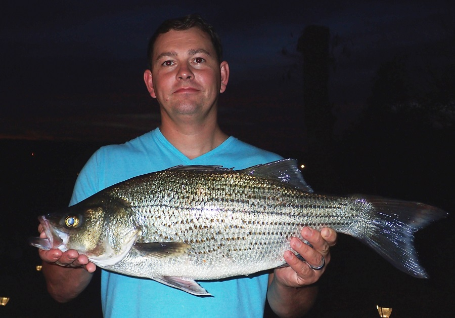 State Record Hybrid Striped Bass Caught Westernbass Com