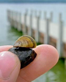 Lake hefner confirms invasive zebra mussels for Lake hefner fishing report
