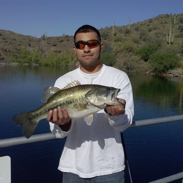 From lake pleasant az bass fishing forum for Lake pleasant az fishing